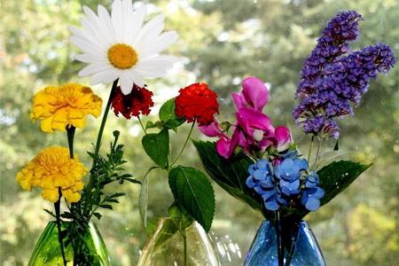 Талисманы цветы для девы