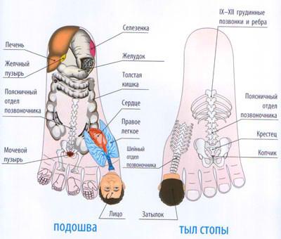 sootvetstvie-vnutrennih-organov-na-nogah